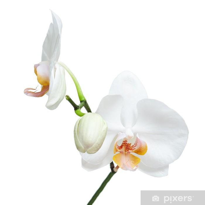 Poster Jour Fife vieux orchidée blanche isolé sur fond blanc. - Sticker mural