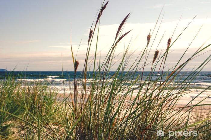 Papier peint vinyle Dune herbe dans la lumière du matin :) - Thèmes