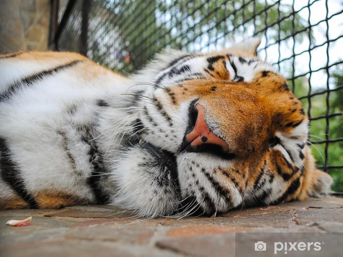 Nálepka Pixerstick Spící tygr čenichu - Savci