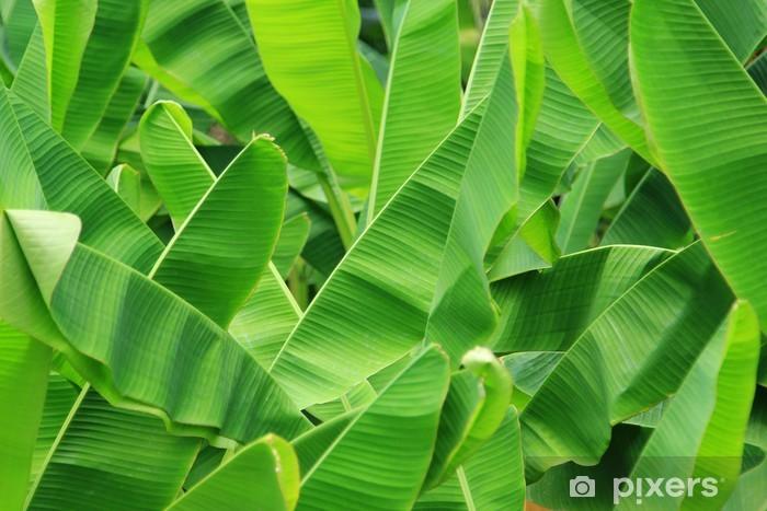 Image result for banana leaf