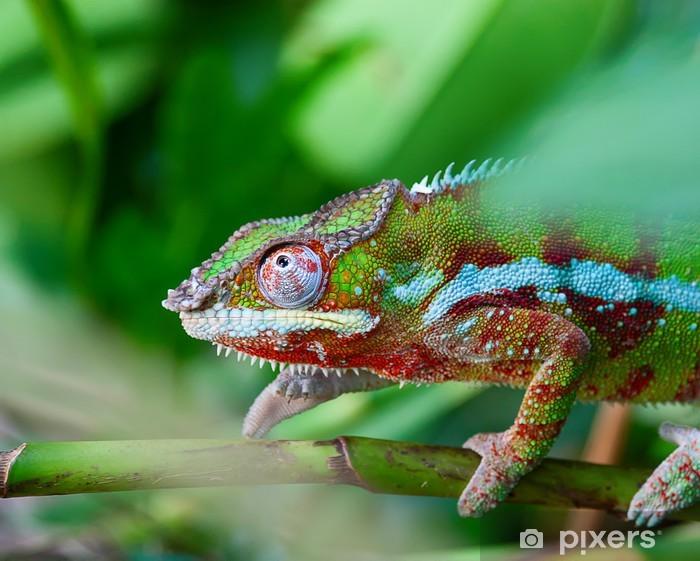 Sticker Pixerstick Green chameleon - Thèmes