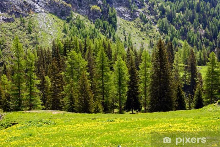 Fototapeta winylowa Iglaki i łąki w górach - Wakacje