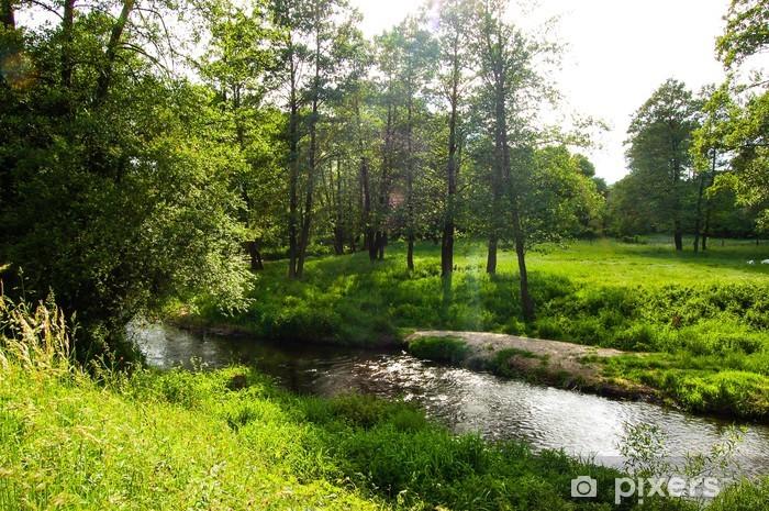Fototapeta winylowa Rzeka w pięknym lesie światła - Sporty na świeżym powietrzu