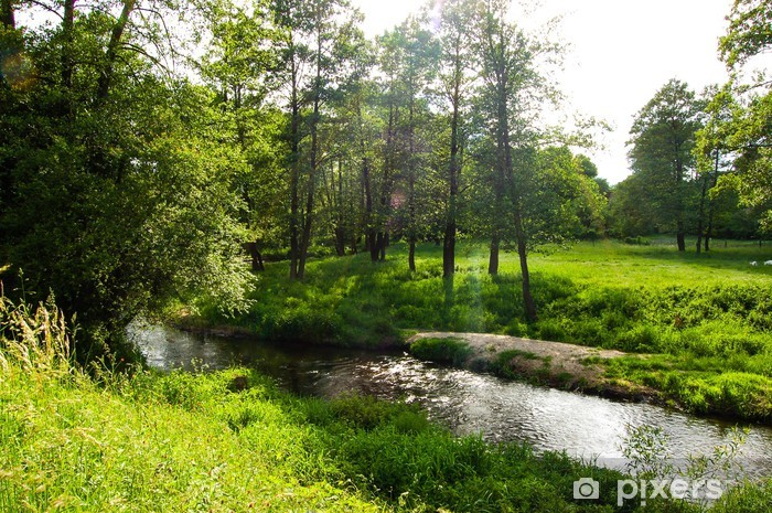 Papier peint vinyle La rivière dans une belle forêt de lumière - Sports d'extérieur