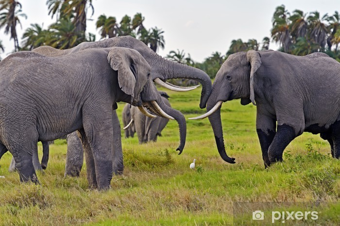 Sticker Pixerstick Éléphants du Kilimandjaro - Thèmes