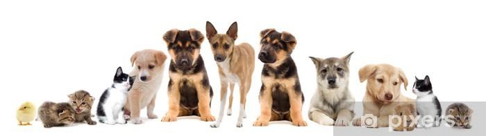 Pixerstick Sticker Stel huisdieren - Zoogdieren