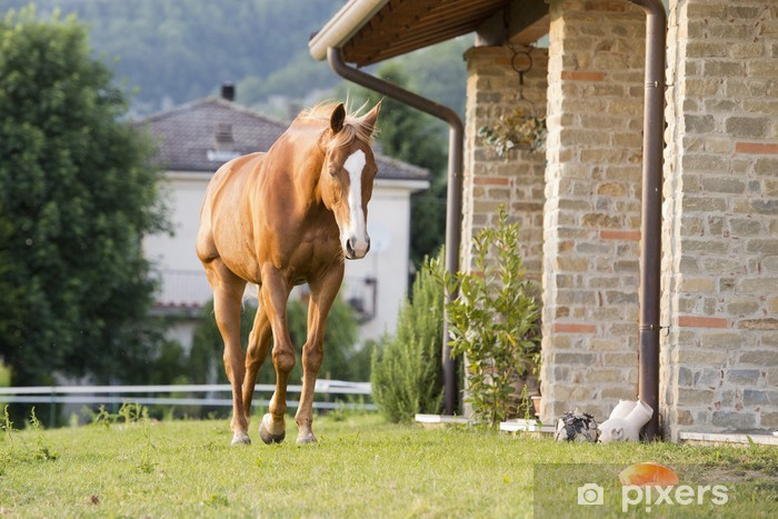 Pixerstick Aufkleber Pferd vor dem Haus - Säugetiere