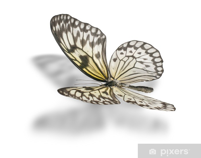 Butterfly isolated on white. Pixerstick Sticker - Other Other
