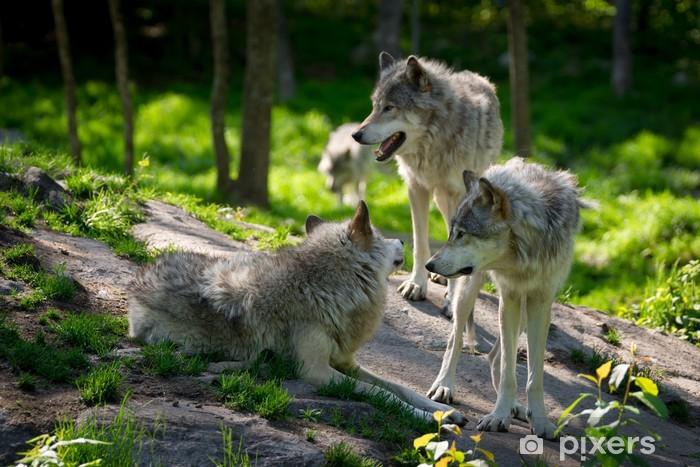 Papier peint vinyle Wolf Pack de trois loups - Thèmes