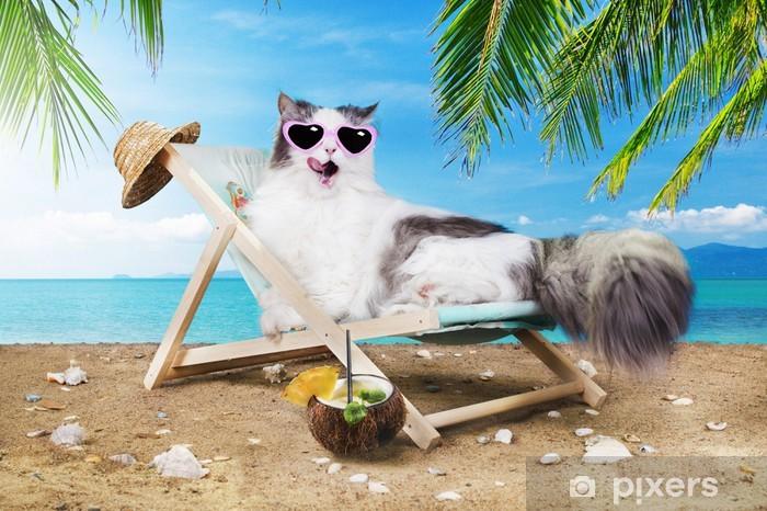 Fototapeta winylowa Kot odpoczynku na leżaku - Tematy