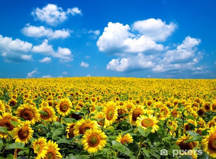 sunflower field Pixerstick Sticker - Themes