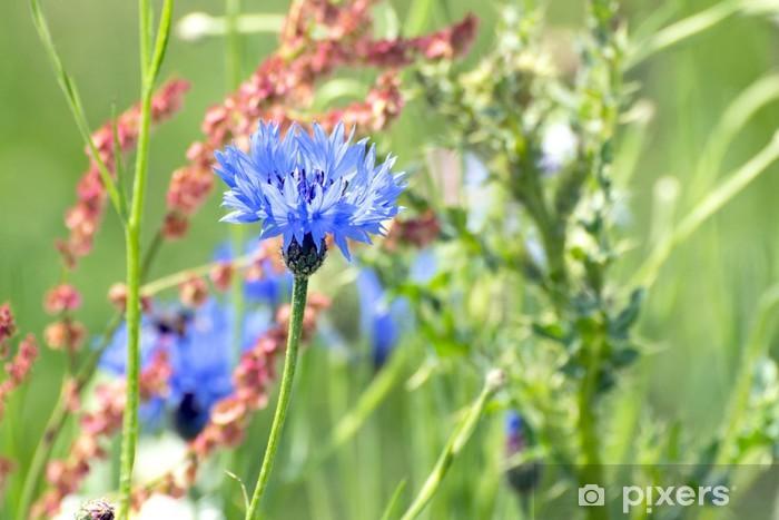 Blue cornflower Pixerstick Sticker - Flowers