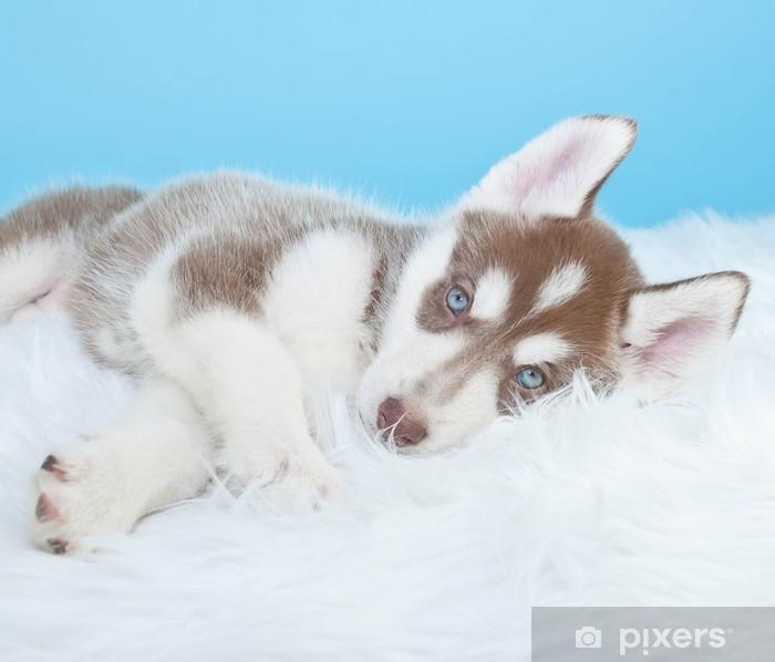 Nálepka Pixerstick Sleepy Husky Puppy - Savci
