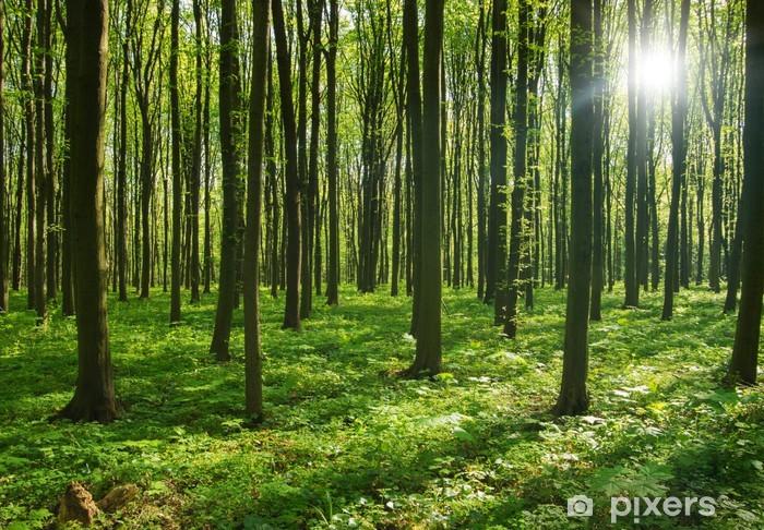 forest trees. nature green wood sunlight backgrounds. Vinyl Wall Mural - Destinations