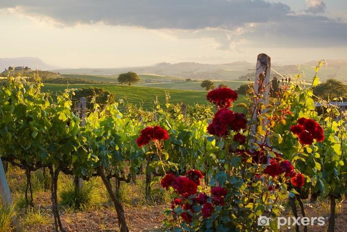 Fototapeta samoprzylepna Toskanii Winnice w upadku - Tematy