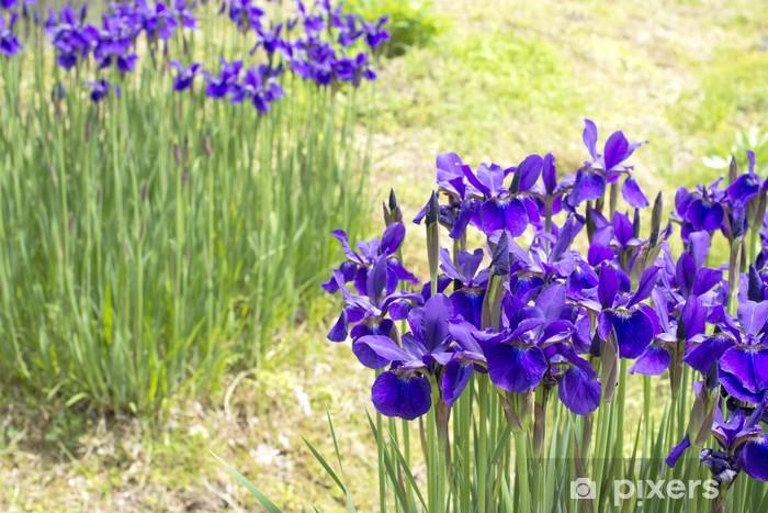 Papier peint vinyle Fleurs d'iris pourpres - Fleurs