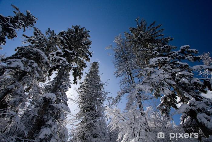 Arbre Sapin Neige Paysage Neigeux Hiver Montagne Ciel Nature Wall Mural Vinyl