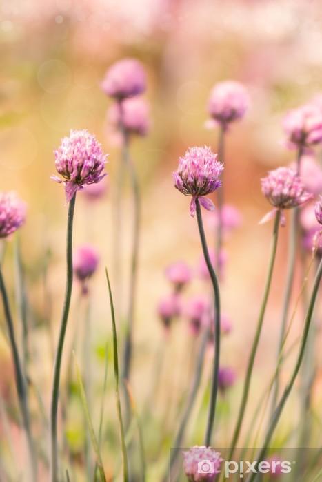 Vinyl-Fototapete Frühlingsblume Schnittlauch auf sonnigen Tag - Blumen