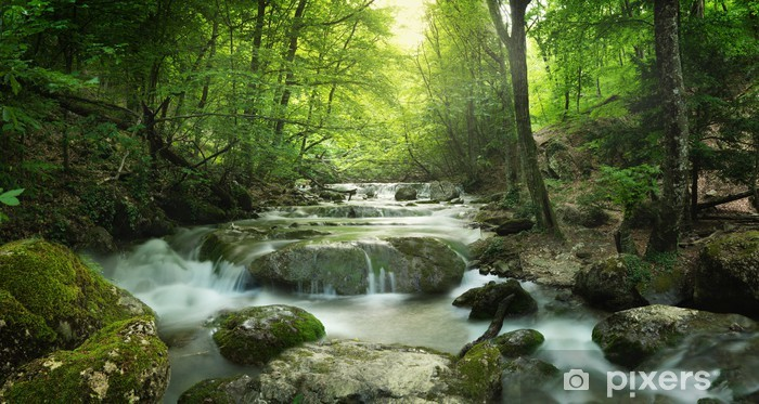 forest waterfall Vinyl Wall Mural - Themes