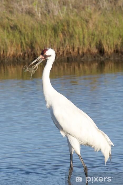 Whooping Crane with Crab Pixerstick Sticker - Birds