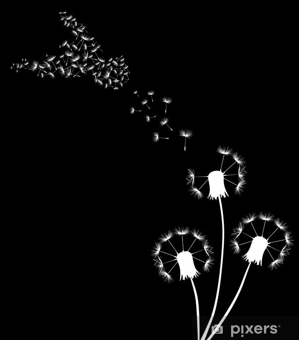 Papier peint vinyle Trois pissenlits blancs et pigeon sur le noir - Plantes