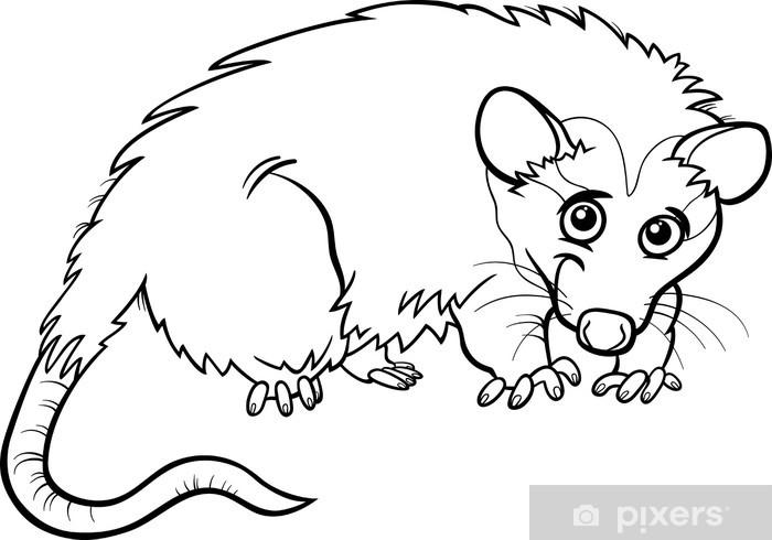 Opossum Hayvan Karikatür Boyama Kitabı Duvar Resmi Pixers Haydi