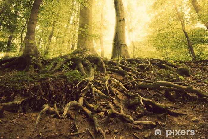 Sticker Pixerstick Roots - Forêt