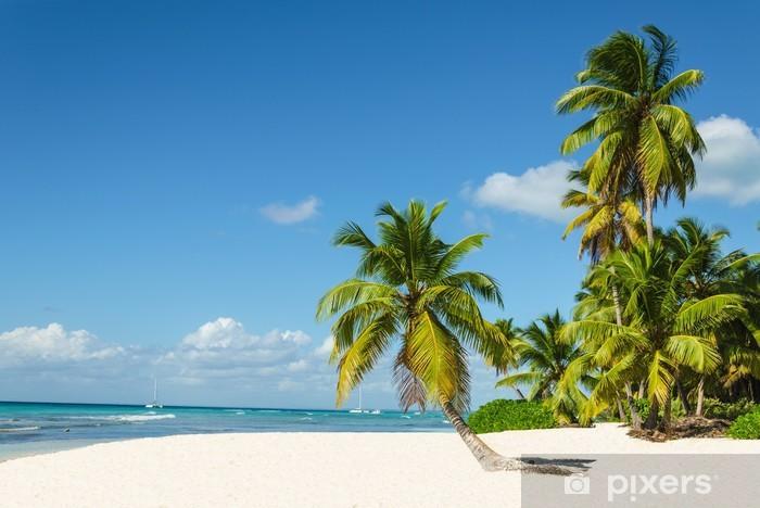 Fotomural Estándar Altas palmeras y hermosas playa de arena blanca - Palmeras