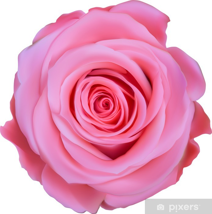 single pink rose top view illustration sticker pixers we live