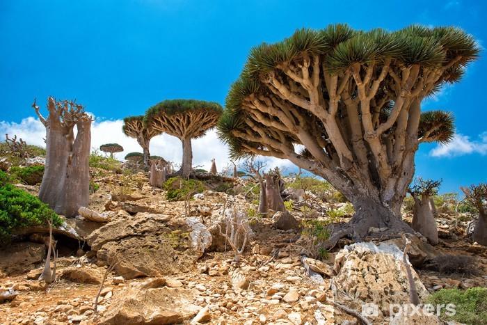 Papier peint vinyle Socotra Homhil dragonnier - Îles