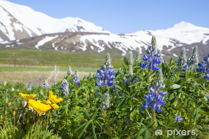 Blue lupin flowers on a background of snow mountains Pixerstick Sticker - Europe