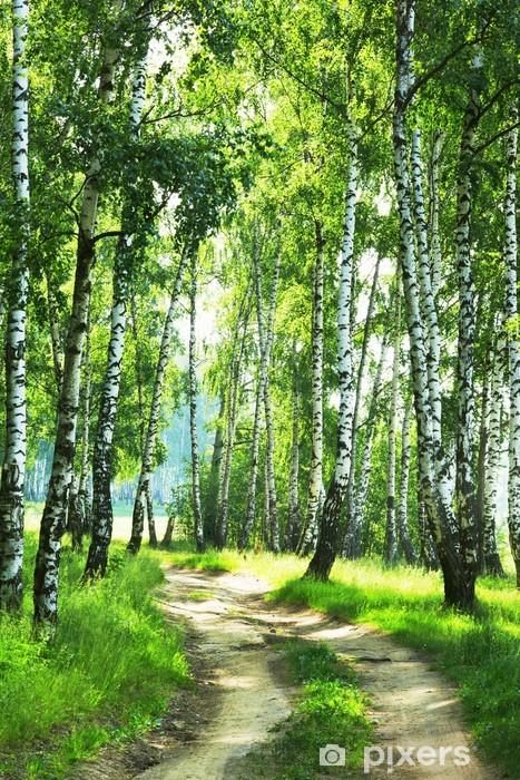 Fototapeta winylowa Las brzozowy - iStaging