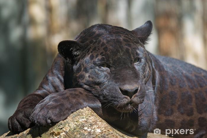 Carta da Parati in Vinile Black Leopard - Mammiferi