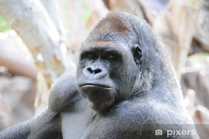 60b24d54f5f8f Fototapete Gorilla • Pixers® - Wir leben
