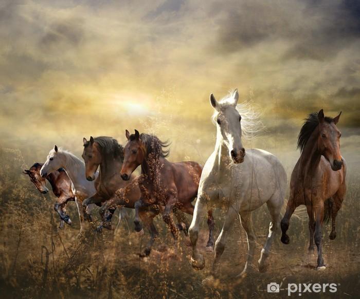 Fototapeta winylowa Stado koni galopujących darmo na zachodzie słońca - Tematy