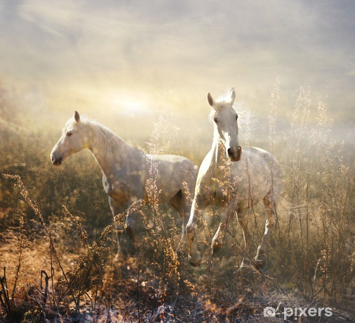 Plakat Biały koń galopujący na łące -