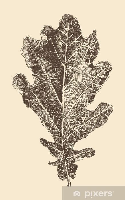 Meşe Yaprağı Oyma Tarzı Klasik Illüstrasyon Elle çizilmiş