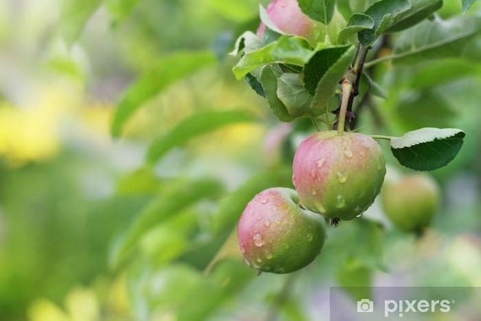 Naklejka Pixerstick Jabłko owoce w ogrodzie po deszczu. - Pory roku