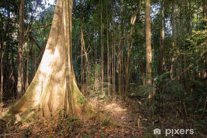 Naklejka Pixerstick Sunlight penetrując gęstą roślinność dżungli w Amazonii - Drzewa
