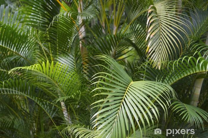 Fotomural Estándar Verde tropical fronda de la palma de la selva - Brasil