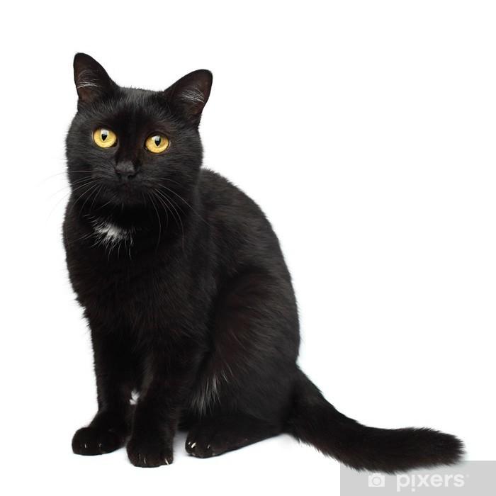 bild schwarze katze  vorlagen zum ausmalen gratis ausdrucken