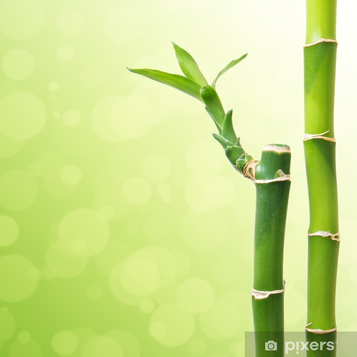 642c57edf94b Beautiful Bamboo Border Wall Mural • Pixers® • We live to change