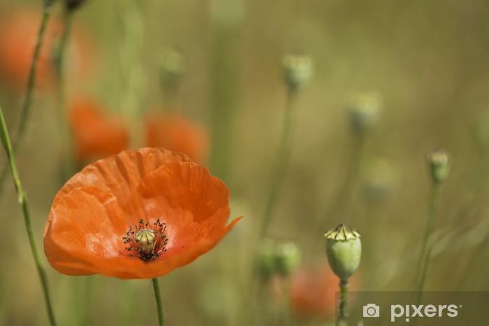 Vinyl-Fototapete Rote Mohnblume Wildblumen Grünland - Blumen
