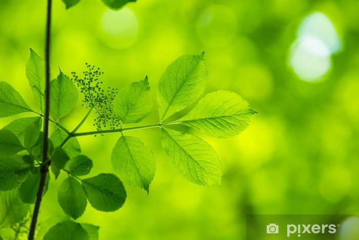 Naklejka Pixerstick Zielone liście z słońca - Tematy
