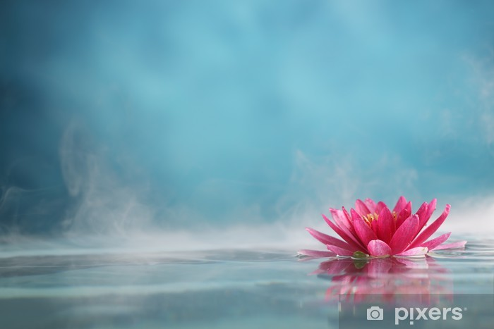 water lily Pixerstick Sticker - Styles