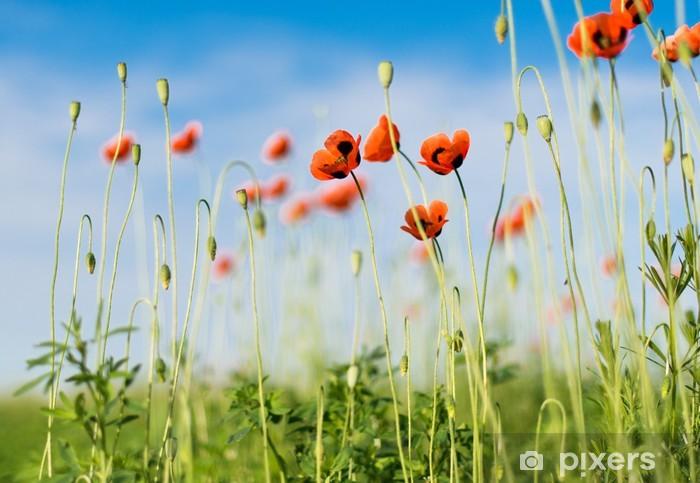 Papier peint vinyle Champ de coquelicots sur fond de ciel bleu. Composition de la nature. - Fleurs