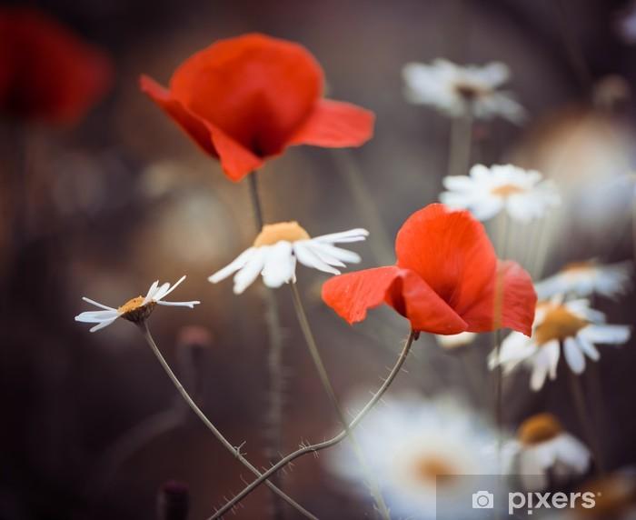 Vinilo Pixerstick Flores de amapola rojas y margaritas silvestres - Flores