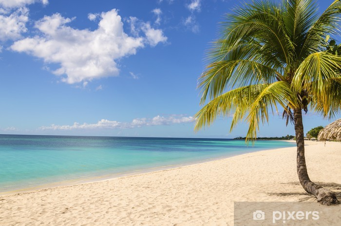 Afwasbaar Fotobehang Palm treen op exotische Caribische strand tegen de blauwe hemel - Landen