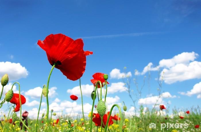 Papier peint vinyle Coquelicot rouge et de fleurs sauvages - Campagne