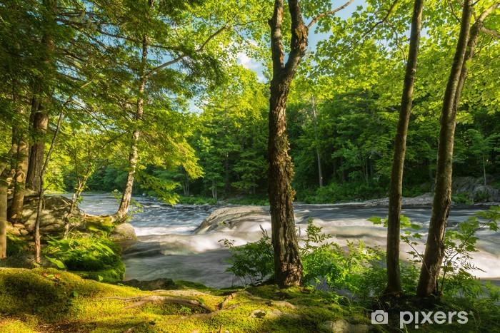 Fototapet av Vinyl Flod i skogen - Teman